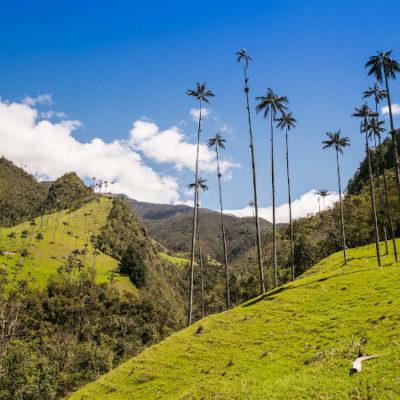 valle cocora palmeras que hacer en eje cafetero